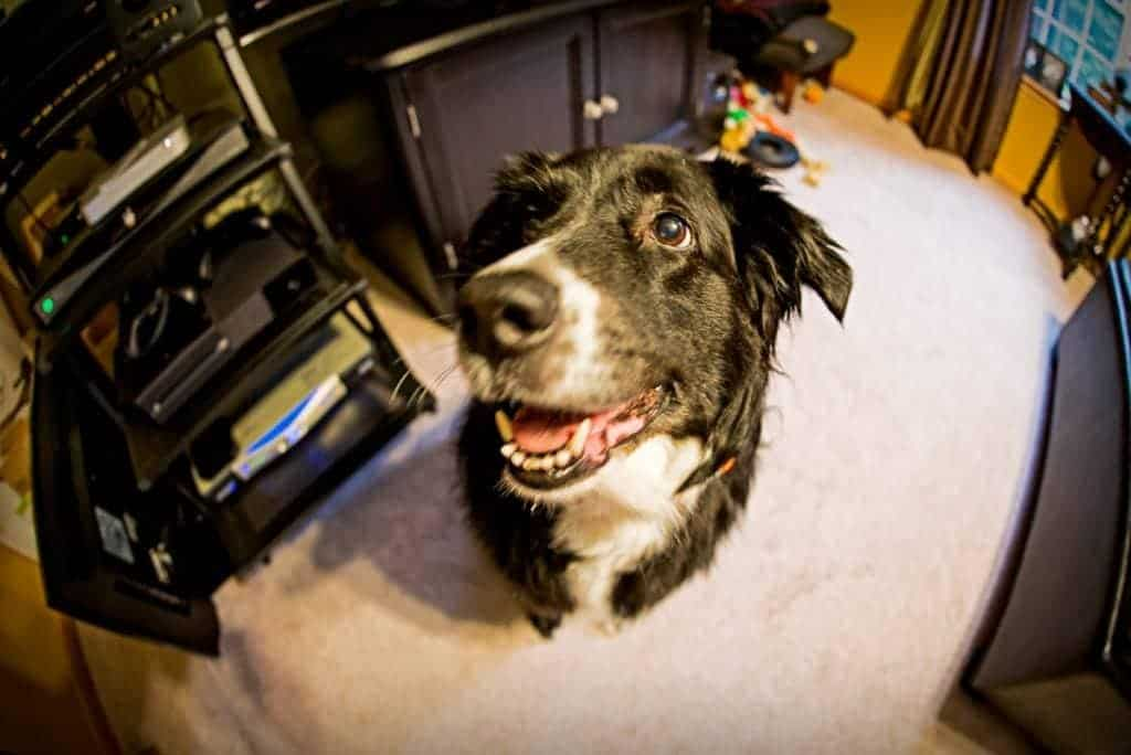 Roxy is impressed with her dad's new fisheye lens