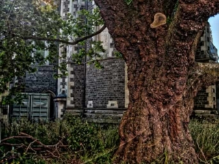 Christchurch Cathedral Tree