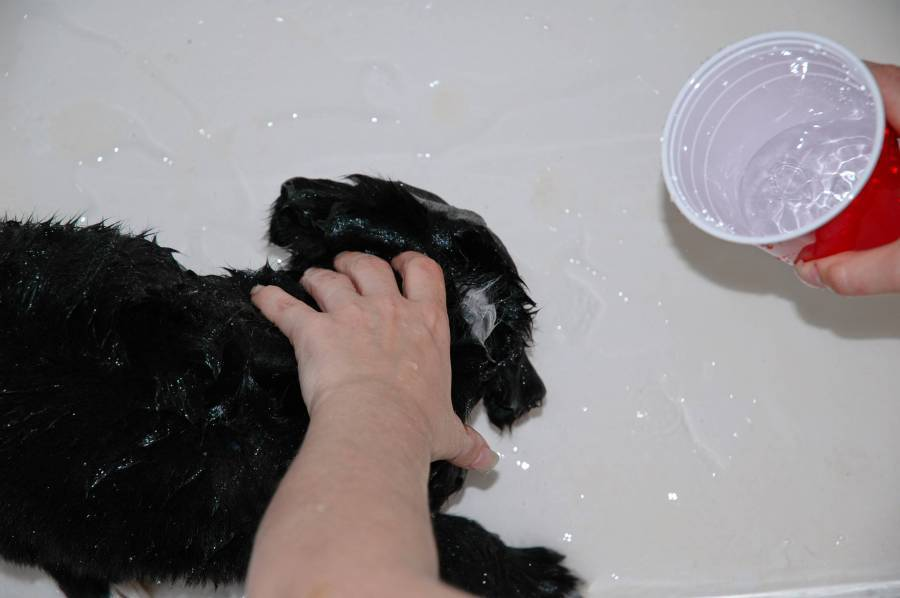 Roxy - First Bath