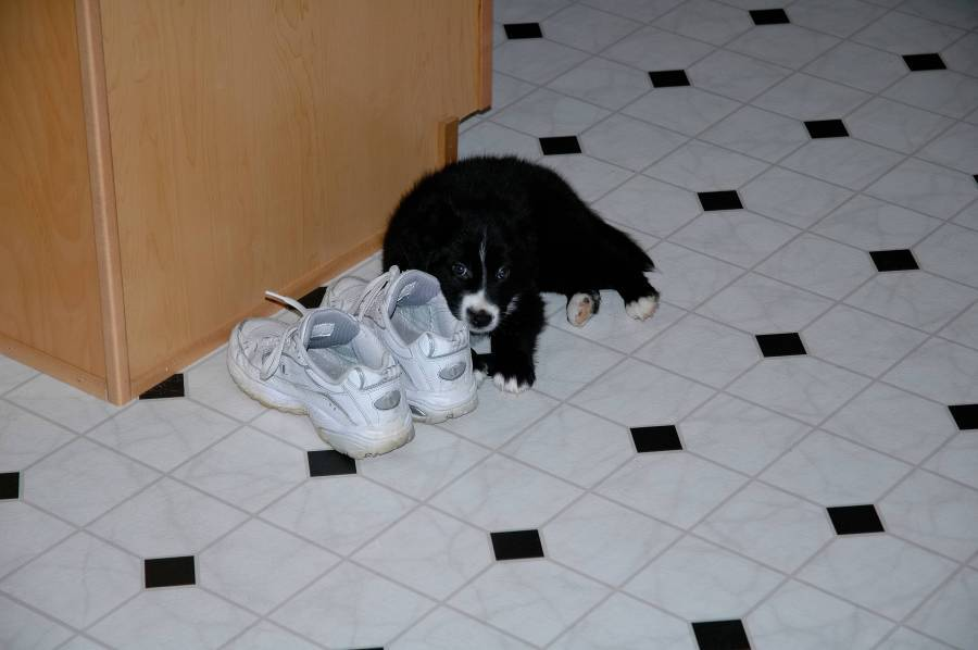 Roxy - I is hiding behind moms sneakers