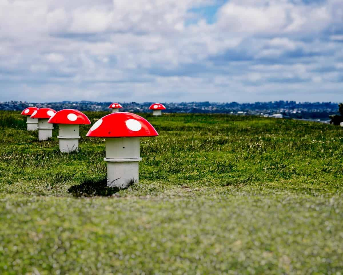 Art Meets Function, and Mario Brothers: The top of Mount Victoria features mushroom-shaped vents which are connected to the underground water reservoir.