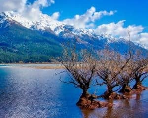 Three trees growing out of the banks of Lake Wakatipu on the south island of New Zealand with mountains and clouds in the background