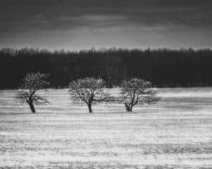 Three trees in a snowy field outside of Jim Thorpe, Pennsylvania